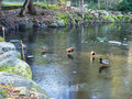 Icy duck pond in winter ice on the surface of a located lithia park ashland oregon Stock Photography