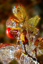 Icy rosehip in autumn after ice storm Stock Photos