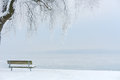 Icy tree on an icy lake ii ice burdened european cottonwood and snow covered bench the shores of alpine a foggy winter day Stock Images