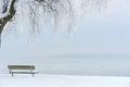 Icy Tree on an Icy Lake II Royalty Free Stock Photo