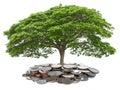Idea concept tree growth money saving isolate on white backgroun Royalty Free Stock Photo