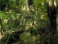 Idol in jungle