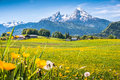 Idyllic alpine landscape with green meadows farmhouses and snowcapped mountain tops in the alps fresh blooming flowers typical in Stock Photography