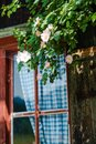 Idyllic bavarian alpine cottage window with curtains and wild roses Royalty Free Stock Photo