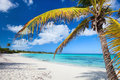Idyllic beach with palm tree at bahamas Stock Images