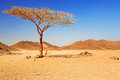 Idyllic desert scenery with single tree egypt Stock Image