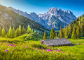 Idyllic landscape in the alps with traditional mountain chalet at sunset and fresh green pastures blooming flowers Stock Images