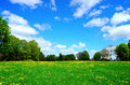 Idyllic meadow in summer and blue sky Royalty Free Stock Photography