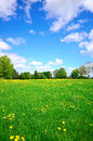 Idyllic meadow in summer and blue sky Stock Image