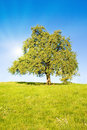 Idyllic meadow with tree Royalty Free Stock Images