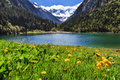 Idyllic mountain landscape in the Alps in springtime with blooming flowers and mountain lake. Stilluptal, Austria, Tyrol.
