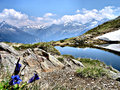 Idyllic mountain landscape the small lake speikboden with rocks snow and flowers in the background is the nature park rieserferner Stock Image
