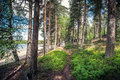 Idyllic pathway middle of forest Royalty Free Stock Photo