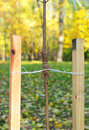 If your tree is still a sapling, use a stake to help it grow for about the first year of its life.