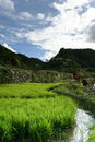 Ifugao rice terraces banaue philippines Royalty Free Stock Image