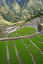 Ifugao rice terraces batad philippines Stock Images