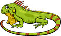 Iguana animal cartoon illustration Royalty Free Stock Photo