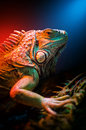 Iguana closeup of looking to the camera Royalty Free Stock Photography