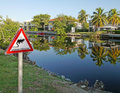 Iguana Crossing Royalty Free Stock Images