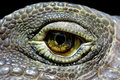 Iguana eye Royalty Free Stock Photo