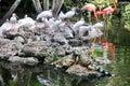 Iguana and flamingo birds in tropical garden Royalty Free Stock Photography