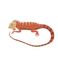 Iguana lizard reptile vector illustration. Royalty Free Stock Photo