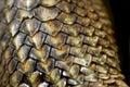 Iguana scales close-up Royalty Free Stock Photo