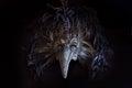 Il dottore venetian mask di peste di carnevale con le piume colorate Immagine Stock Libera da Diritti
