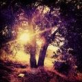 Il sun splende attraverso l albero in una fantasia frequentante dell albero grungy surreale con i colori saturati sulla riva del Immagine Stock
