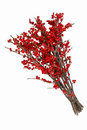 Ilex Verticillata Winterberry ...