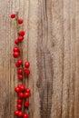 Ilex Verticillata (winterberry...