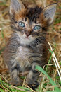 Ill stray kitten Royalty Free Stock Image