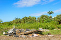Illegal waste dump and tropical forest la reunion island Royalty Free Stock Photo