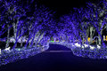 Illumia Light Illumination festival Korea Night Royalty Free Stock Photo