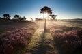 Illuminated countryside path at sunrise Royalty Free Stock Photo