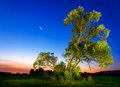 Illuminated old tree at nightfall beautifully ash with deep blue sky and moon Royalty Free Stock Photos