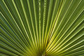 Illuminated solar light palm leaf Royalty Free Stock Photo