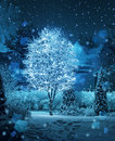 Illuminated tree winter garden snowfall fantasy Royalty Free Stock Photo
