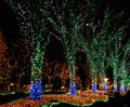 Illuminated trees and ground at christmas time Stock Image