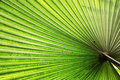 Illuminated tropical palm leaf Royalty Free Stock Photo