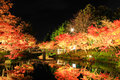 Illumination At Nabana No Sato...