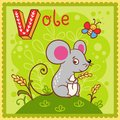 Illustrated alphabet letter v and vole animal for the kids Stock Photo