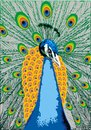 Illustrated noble peacock color as background Royalty Free Stock Images
