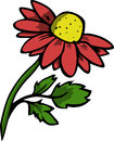 Illustrated red daisy vector isolated on white background Stock Images