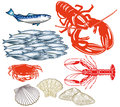 Illustrated set of seafood different isolated on a white background Royalty Free Stock Image