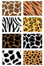 Illustration of animal skin textures Stock Photography