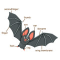 Illustration of bat vocabulary part of body Royalty Free Stock Photo