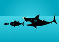Bigger fish prey on smaller fish Royalty Free Stock Photo