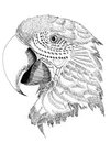 Illustration bird parrot parrot,sketch on paper Stock Photography