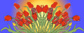 Illustration of a blooming red and yellow tulips
